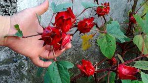 6 flores que te ayudan a reducir la presión arterial
